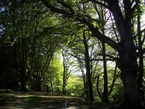 Types Of Woodland Woodlands Co Uk