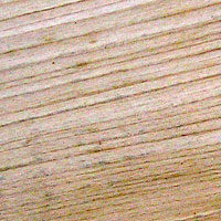grain of lime wood