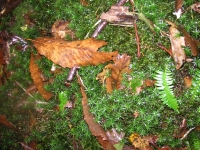 Moss and Leaf Litter