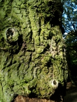 Tree Trunk looking like a Face
