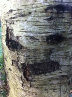 Trees Making Faces<