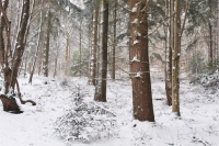 Winter in the Woodland