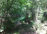 Pathways through broadleaf woodland