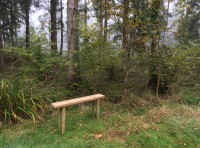 A simple woodland bench