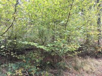 A thriving understory