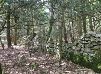 Old stone boundary wall