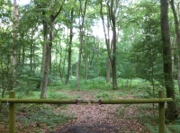 Cobley Wood - SOLD