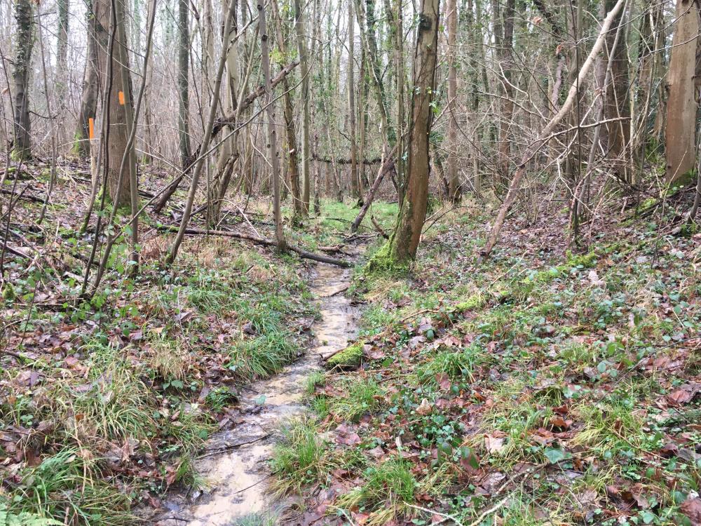 A stream in a gully