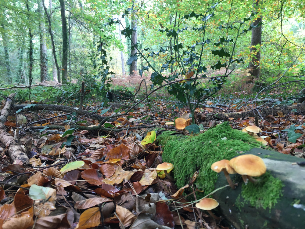 Life on the woodland floor