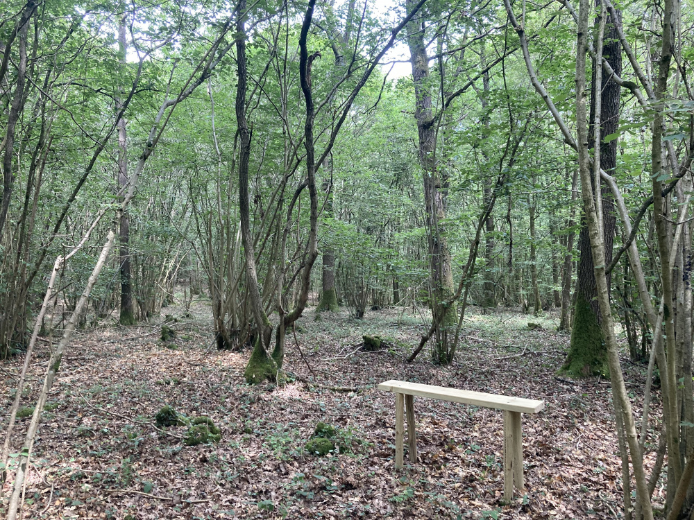 A bench in a clearing