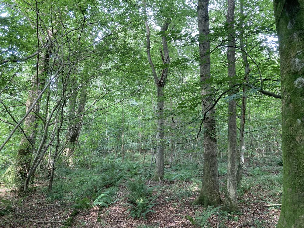 Under the dense oak caopy