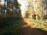 The track to Iddens Wood