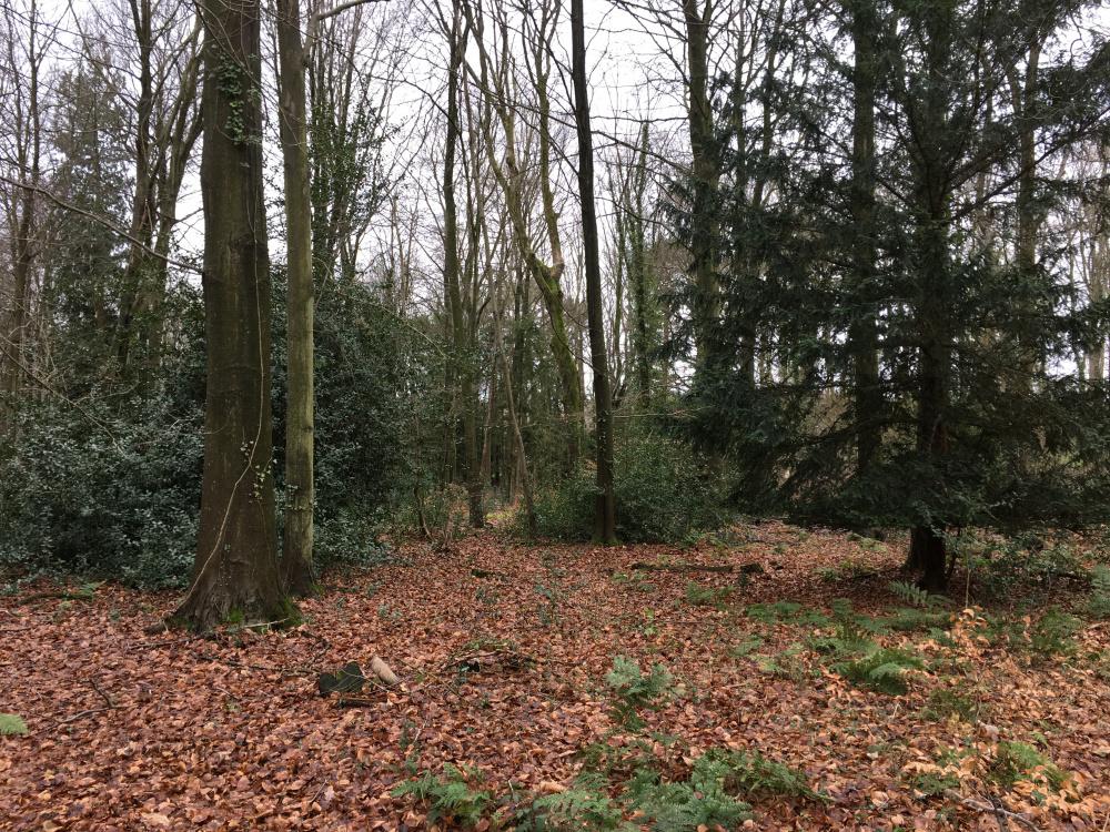 Delightful mixed woodland