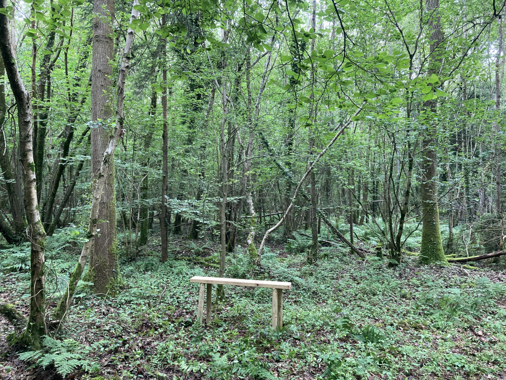 A clearing in the wood