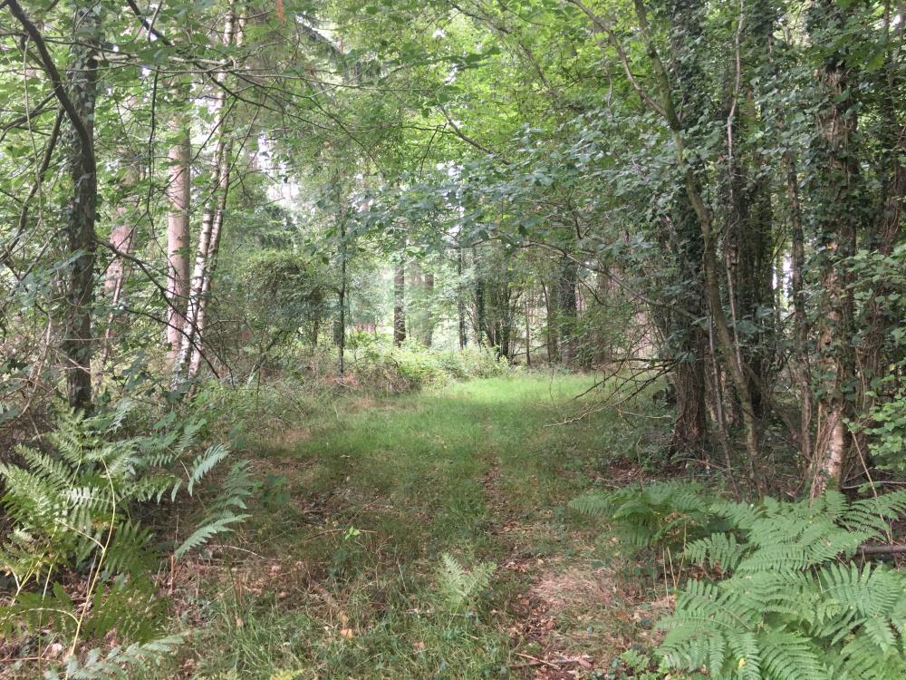 Ancient tracks run through the wood