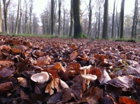 Life in the leaf litter