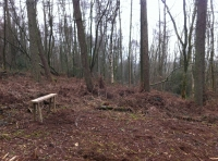 A clearing and bench