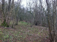 Old hazel coppice beside a clearing