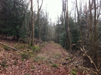 An old logging track