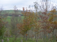 A view of the Exmoor Hills through the young autumn oaks