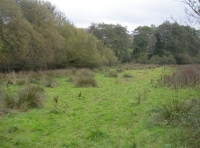 A area of water meadow by the brook at Winn Wood
