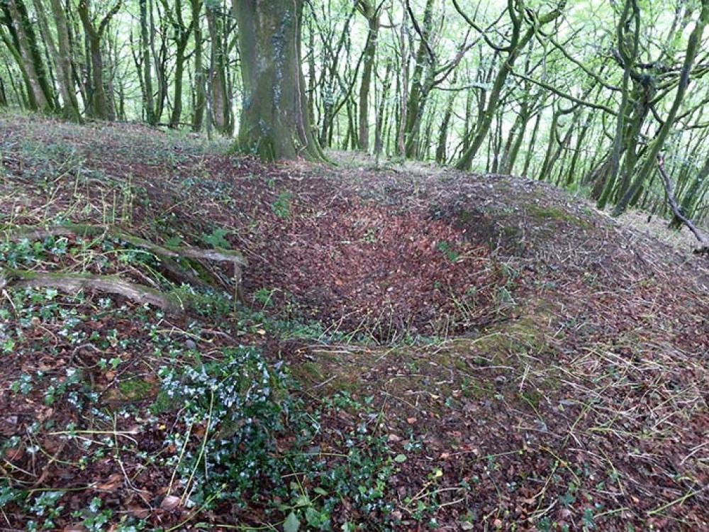 Bedalder Wood Sold Mount Bodmin Cornwall Woodlands