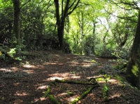 Good sized clearing ideal for camping
