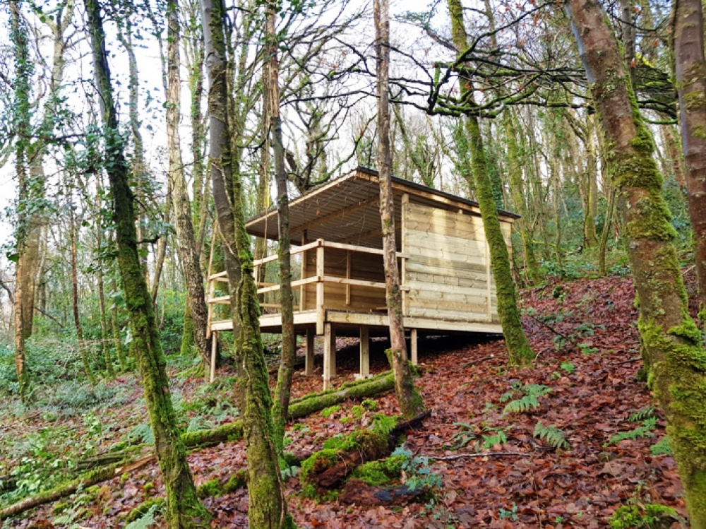 Forestry shelter or wildlife hide