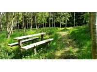 Picnic bench in a sunny clearing