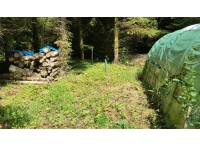 Log stack and useful polytunnel previously used as a tree nursery