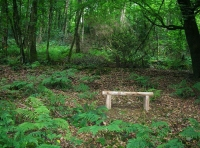 bench in clearing