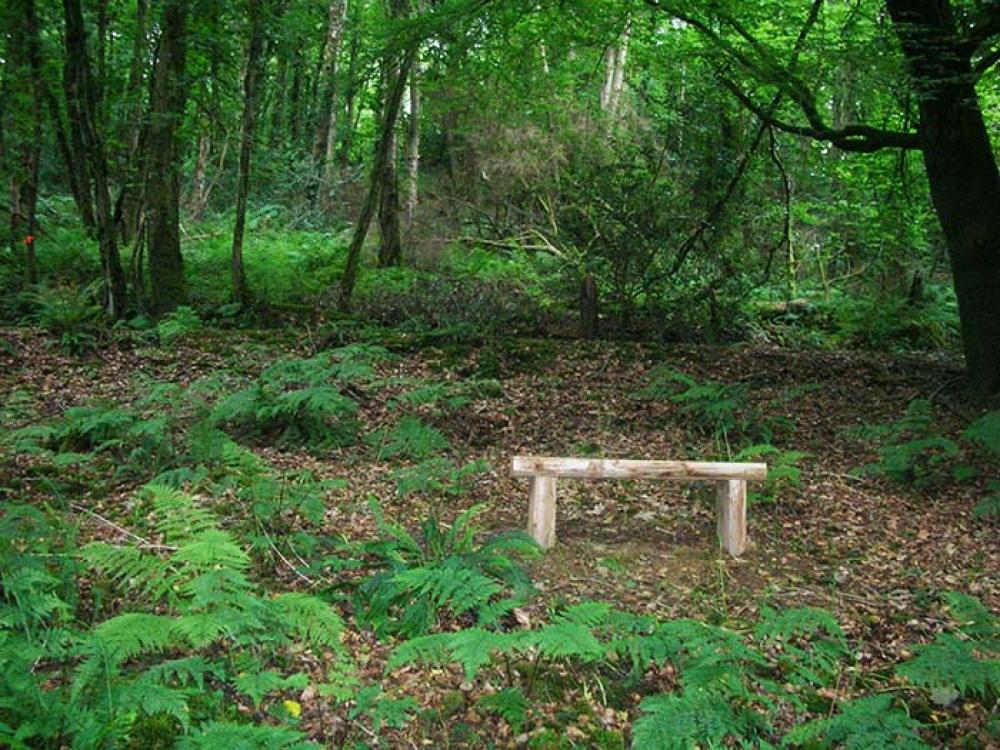 Lydway Wood Lifton Devon Woodlands Co Uk