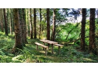 Picnic bench in a clearing near a stream