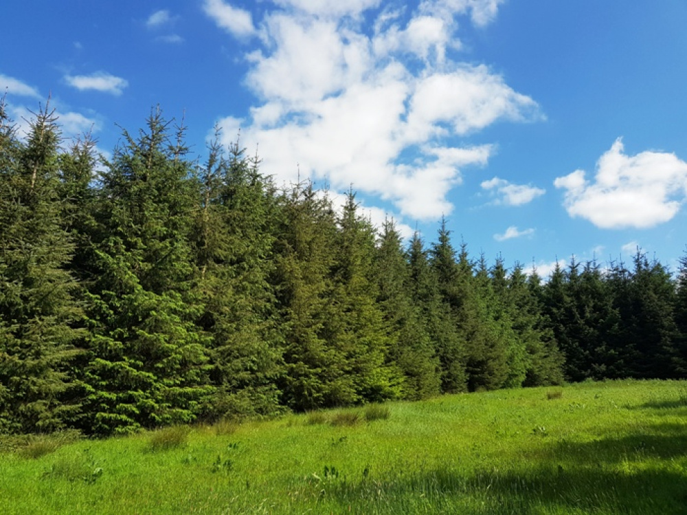 Stunning sunny view of the woodland