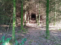 Tunnel through the trees