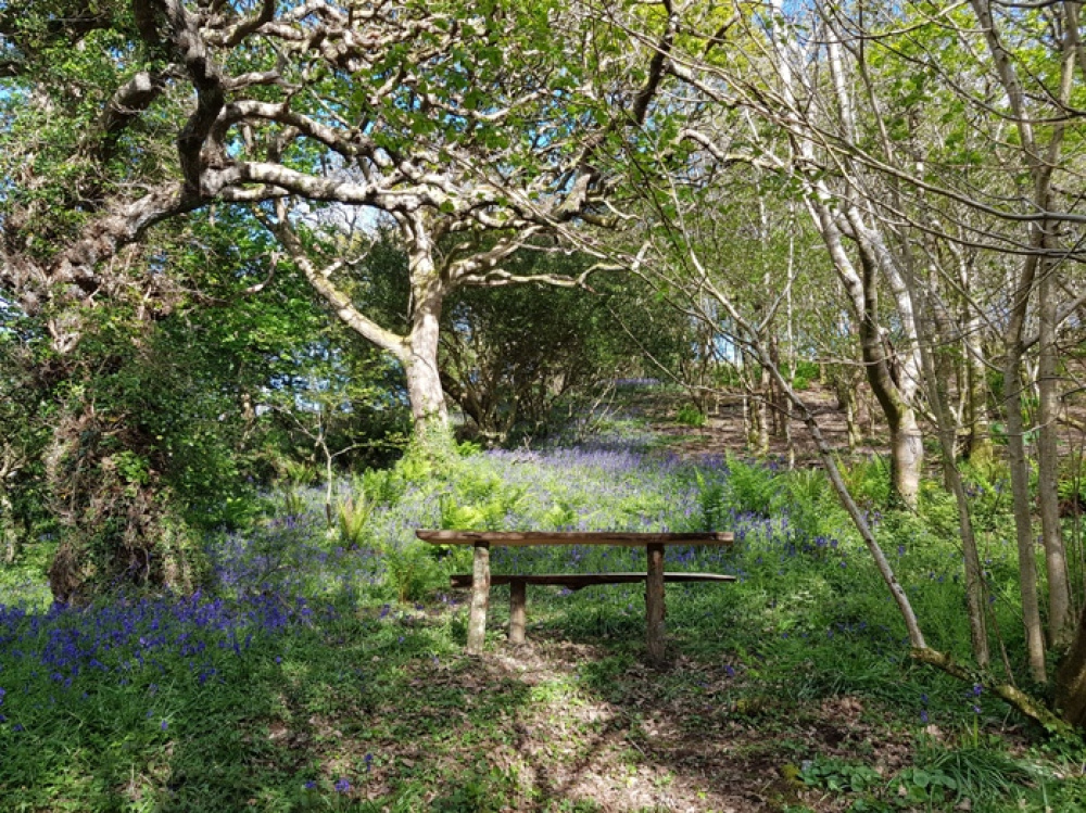 Bench in a glade of bluebells