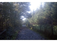 track between conifer and deciduous areas
