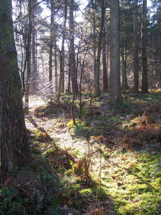 Dunrigg Wood Sold Brampton Carlisle Cumbria