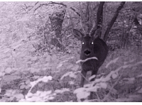 Camera trap capture