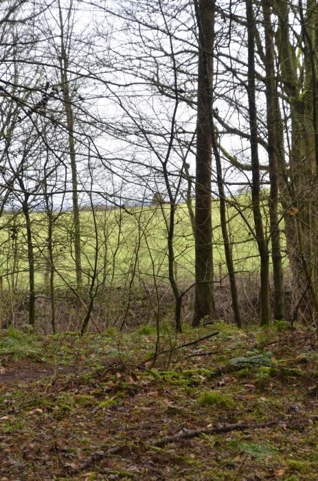 Pennsey Wood, Brampton, Carlisle, Cumbria