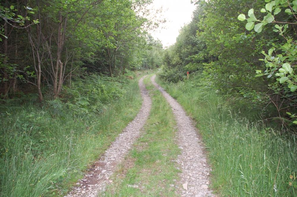 Trackside