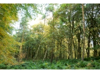 Westmarch wood is a mix of coniferous and broadleaf trees