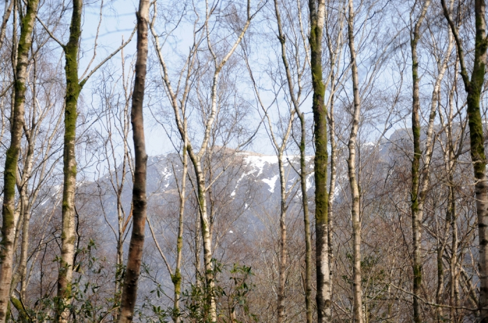 The Screes through the trees