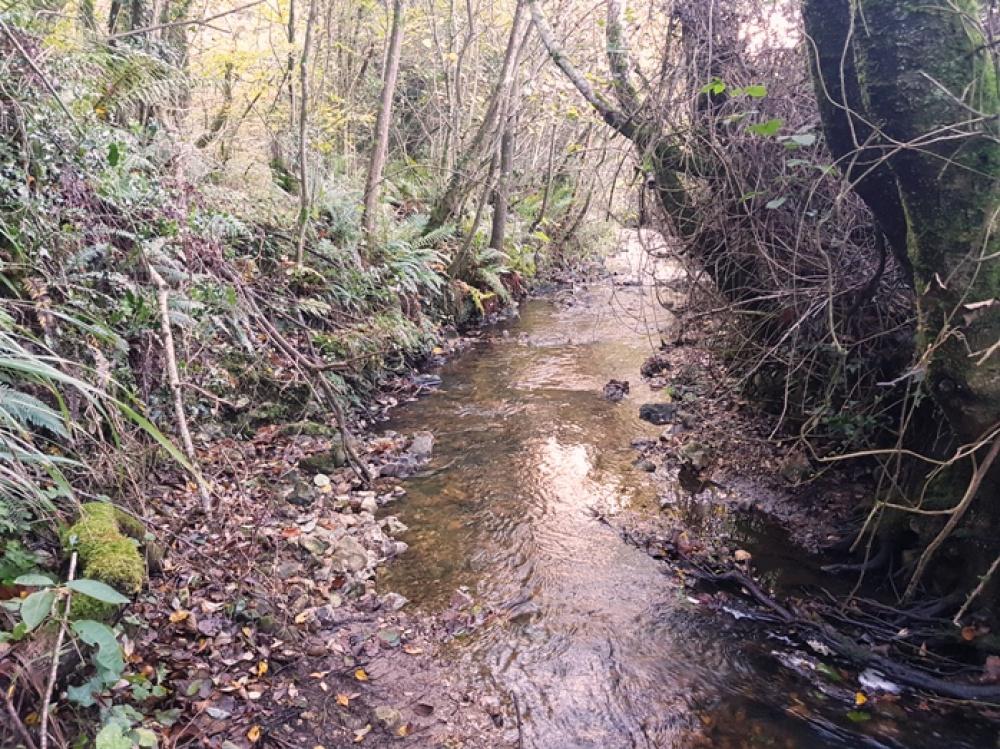 Attractive stream along the western edge