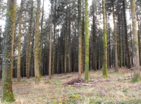 A spacious woodland with scope for thinning and replanting