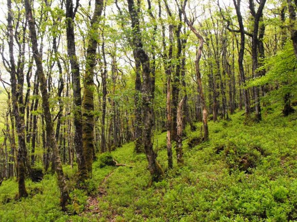 Blossom Wood, Stoodleigh, Near Tiverton, Devon | Woodlands ...