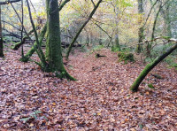 Old path through the woodland