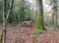 Rustic bench in a clearing