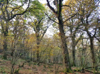 Ancient semi-natural woodland