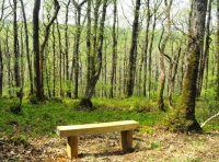 Bench with fine woodland views